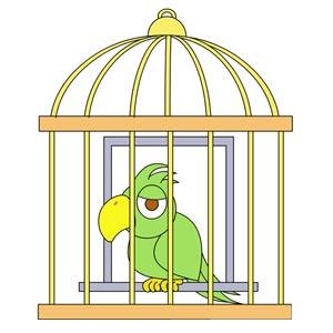 نقاشی طوطی در قفس