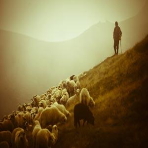 چوپان در دامنه کوه همراه با گوسفندان و چوبدستی در دست