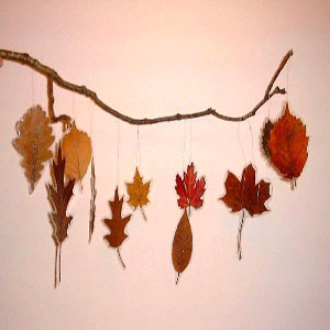 یک شاخه با برگ های مختلف که به آن وصل شده اند